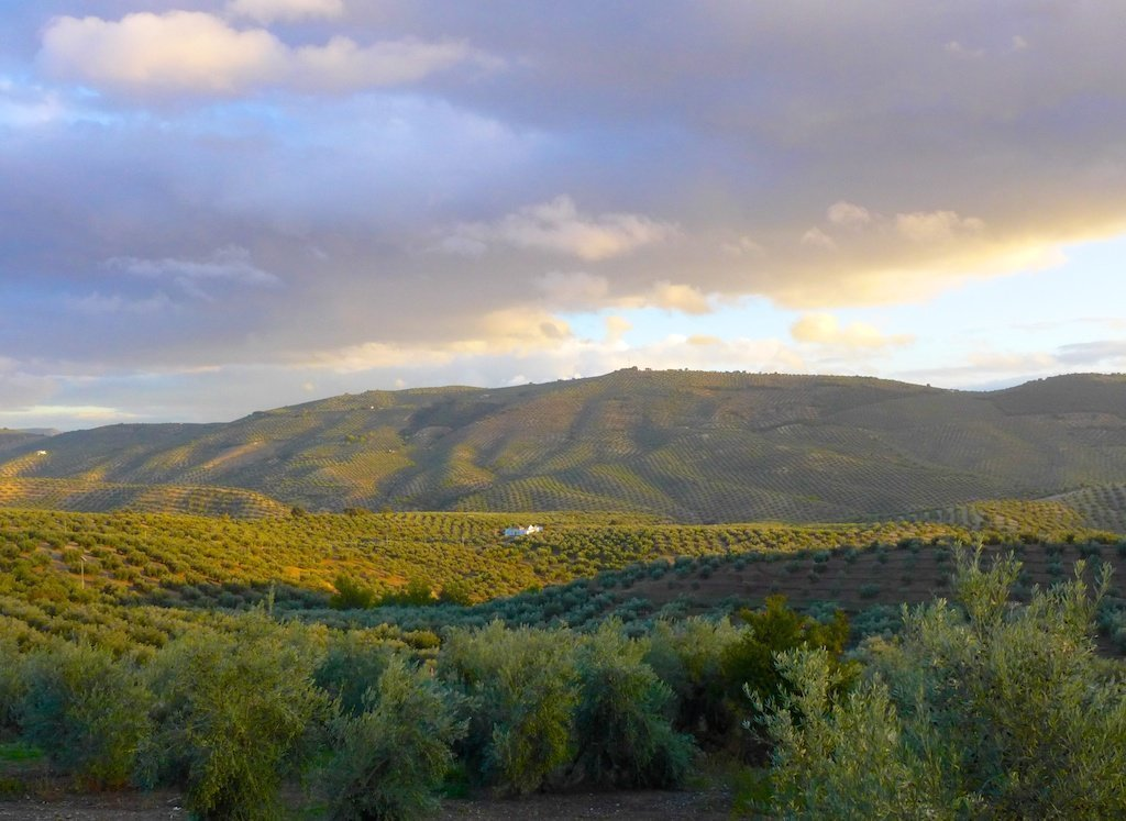 Andalucia_valley of olive groves