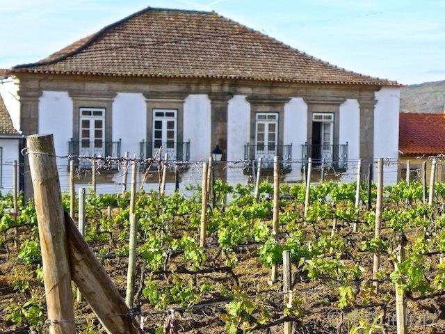 Douro+Provesende+quinta+vineyard