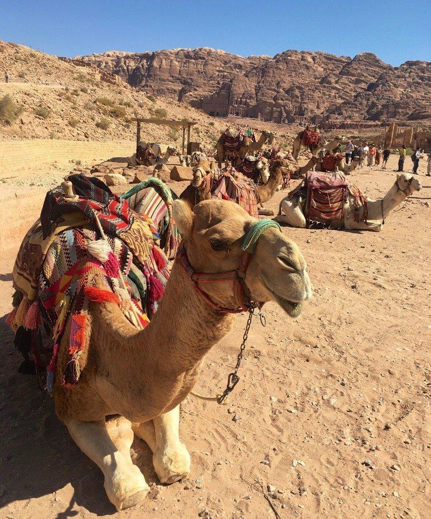 Petra - camel car-park