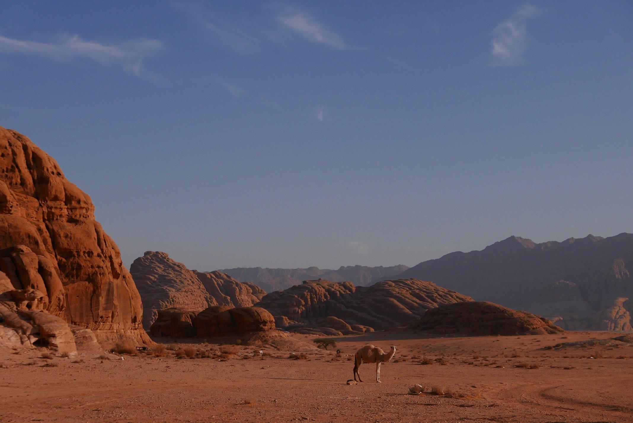 Jordan, Wadi Rum, desert, camel