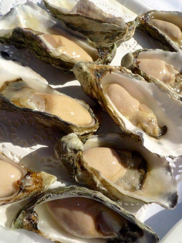 Australia, oysters
