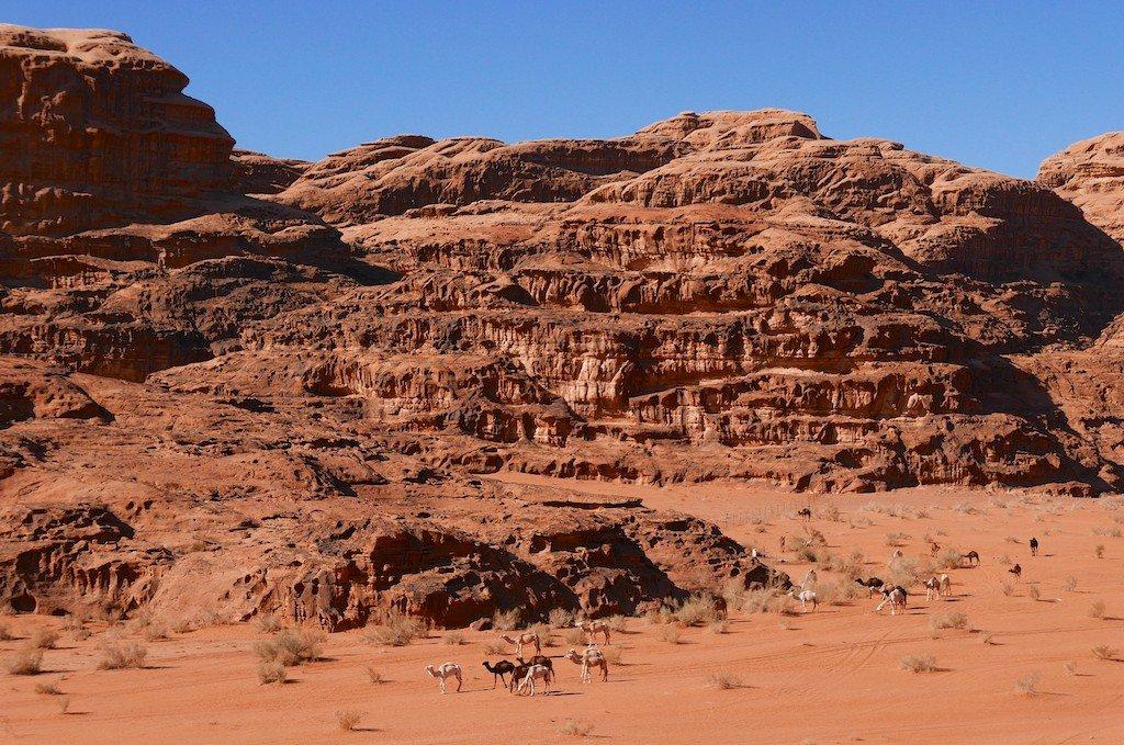 Jordan, Wadi Rum, desert, sandstone, camels
