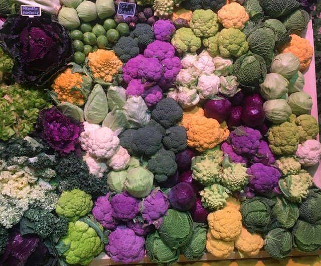 Multi-coloured brassica and cabbages piled up in a display in the trade hall