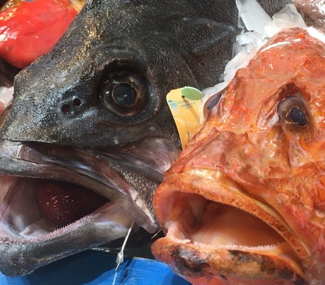 Close-ups of fresh fish on show at the gastro fair