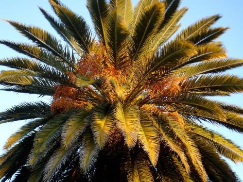 Oaxaca, the perfect palm-tree
